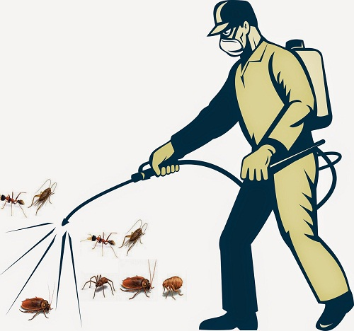 Dịch vụ diệt côn trùng chuyên nghiệp tại Hà Giang