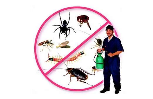 Dịch vụ diệt côn trùng chuyên nghiệp ở TPHCM